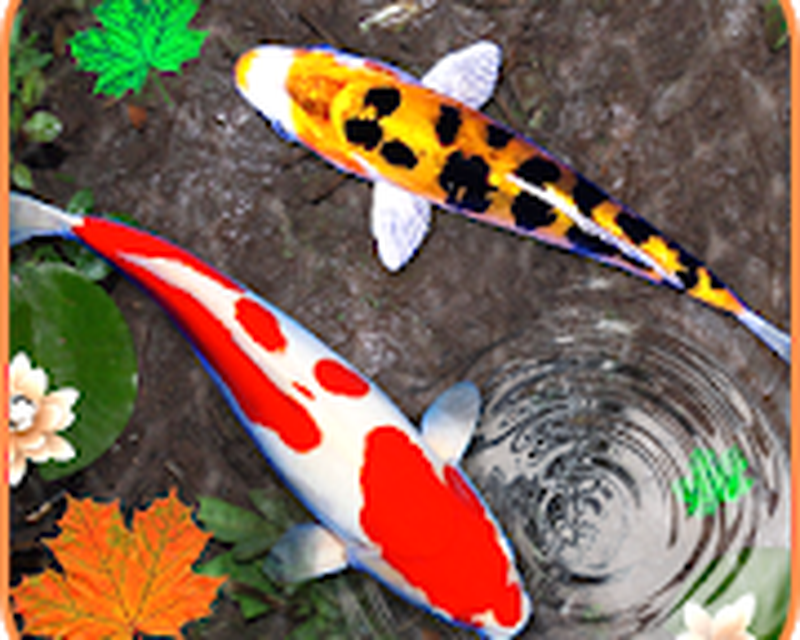Descargar Koi Fish Wallpaper Hd 3d Fish Live Wallpaper 10