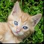 Jogos de Gatos e Gatas fofos 4.41.023