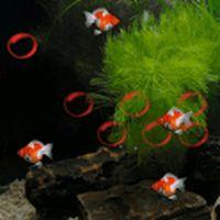 Ícone do apk Bubble Aquarium Live Wallpaper