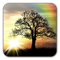Sun Rise Live Wallpaper Free 4.8.3