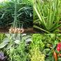 Plantes médicinales 2.6.0