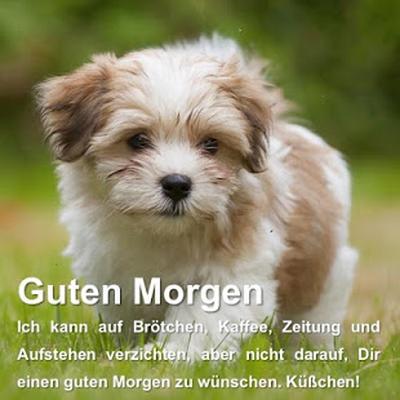 Guten Morgen Sprüche Und Gute Nacht Sprüche App Android