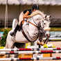 Curse de cai și sărituri master Stunts 3D 1.1