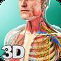Human Anatomy 1.3