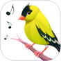 Richiami Uccelli 6.0.1