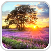 Perfect Sunset Live Wallpaper Android Free Download Perfect Sunset