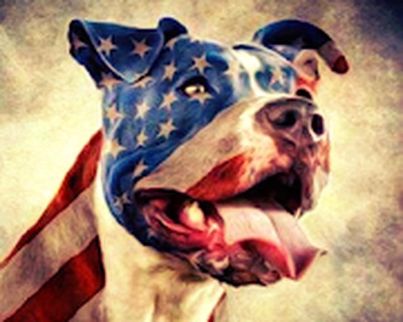 imagen-pitbull-wallpaper-0big.jpg