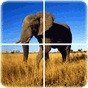 Animal Puzzle v1.1.1 APK