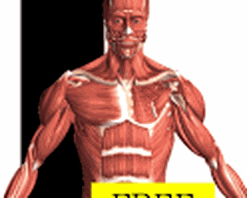 Fancy Visual Anatomy Free Elaboration - Human Anatomy Images ...