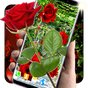 3D Red Roses Parallax Live Wallpapers 5.5.0