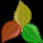 Plantassoc - companion planting 4.9