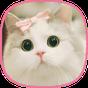 kediler duvar kağıtları - güzel kedi resimleri 1.0