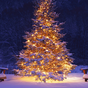 3D Christmas Live Wallpaper 1.5