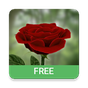 3D Rose Live Wallpaper Free 5.4