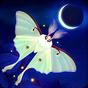 Flutter: Starlight 1.551