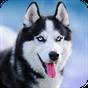 Talking Husky 1.8.1