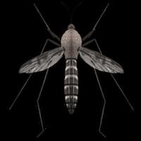 Ícone do Anti-Mosquito Som Truque