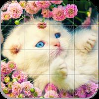 Ícone do Quebra-cabeça - Gatos