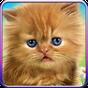 Berbicara kucing bayi. 1.480.0.338
