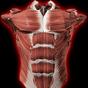 Studia il corpo umano su un modello 3D