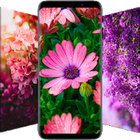 Flower Wallpapers Colorful Flowers In Hd 4k 206
