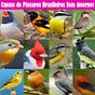 Cantos de Pássaros Brasileiros Sem internet 2019 1.2