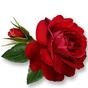 New WAStickerApps Flowers  1.5