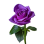 Roses Stickers-WastickerApps 1.0