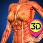 Female Anatomy : Woman Body Visualizer  APK