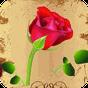Hoa hồng Live Wallpaper