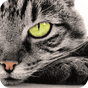 Spot The Cat v1.2.3 APK
