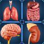 My Organs Anatomy 1.2