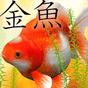 Gold Fish 3D Live Wallpaper 1.1.2