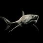 Tiburón 4K 2.0