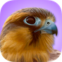 iBird Pro Birds North America 7.7.1044