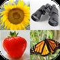 As imagens fáceis - Fotos-Quiz com 4 tópicos