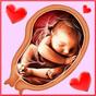 Pregnancy Week by week 6.00001