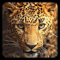 Animales Silvestres 70 Android Descargar Gratis