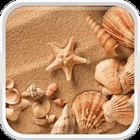 Conchiglia Di Mare Sfondo 50 Download Gratis Android
