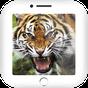 Versi degli animali 2.3.0.23 APK