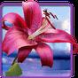 Fleurs, touche magique 1.0.6