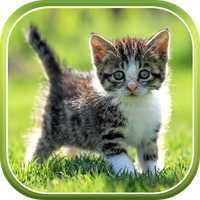Cat Live Wallpaper Android Live Wallpapers 3d Androidout