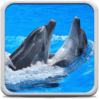 Delfini Sfondi Animati