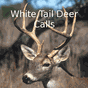 Whitetail Deer Calls 4.1