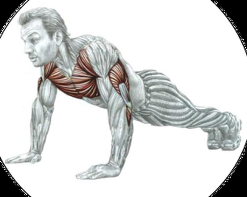 Отжимание от пола какие мышцы качаются фото зеркало