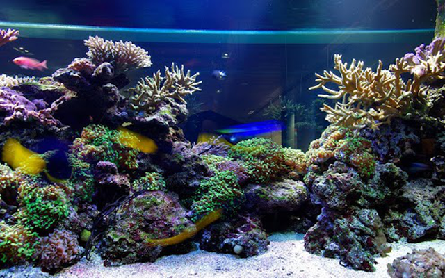 Unduh 7700 Wallpaper Animasi Aquarium Terbaik