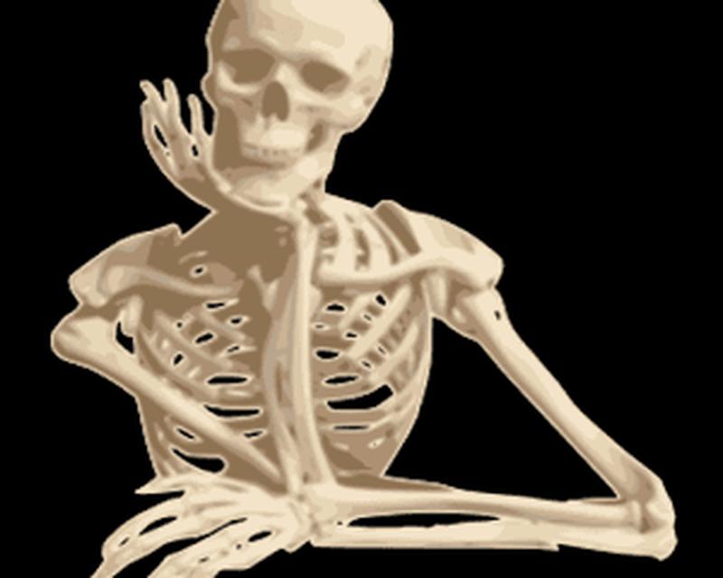 Human Anatomy Android Free Download Human Anatomy App