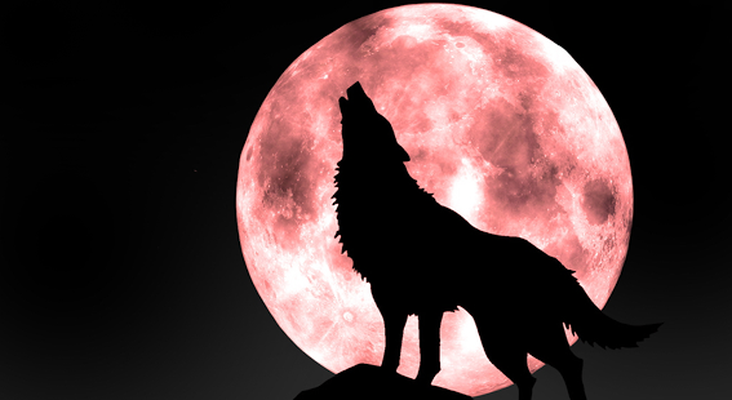 Wolf Live Wallpaper Android Free Download Wolf Live Wallpaper App