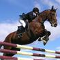 Horse Racing Free 1.0.2 APK