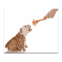 Dog Teaser APK icon